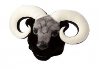 Ram Mascot:  Ever since 1948 the mascot of Cornell has been the Ram, and it's gone through many incarnations, from a real, live member of the genus ovis, to a drawing of a tough-looking sheep sporting a baseball cap, to a student or staff member dressed in a costume. The latest version of the Ram, known as Ulysses, arrived in 2010 after a fire damaged the previous costume.