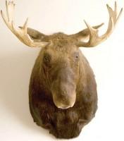 moosehead-1-1