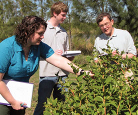 Seniors Audrey Saunders and Jeff Curran examine blueberry plants alongside President Les Garner while performing a case study in Montevideo, Uruguay. The case study was sponsored by the Berry Center.