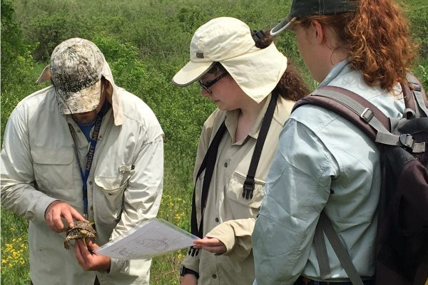Kelly Mickael '18 and Julia Eastham '19 are working with Professor of Biology Andy McCollum to study box turtles.