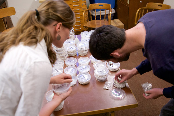 As part of their summer research project, Professor Kelsey Feser '10 and John Lewis '17 sort through mollusk shells obtained from tropical seagrass beds in order to date them using Amino Acid Racemization.