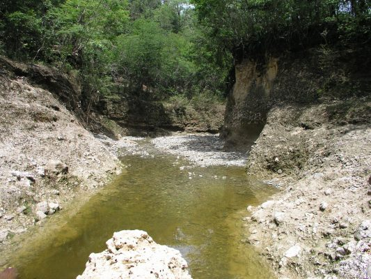 The walls of this narrow stream valley in the Dominican Republic are composed of soft, Miocene-age sediments that contain well-preserved marine fauna such as the coral sample used in this study. Photo by Rhawn Denniston.