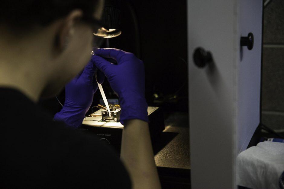 Students research in Professor Jai Shanata's lab 8