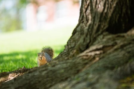 One of Cornell's many campus squirrels.