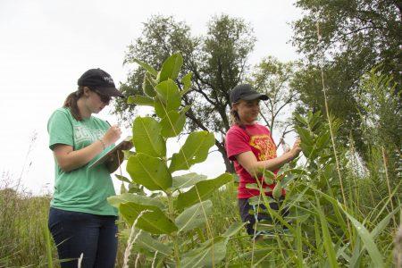 Students studying milkweek in a prairie