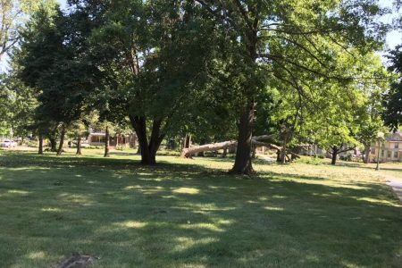 Tree damage from severe weather on Aug. 10. 2020
