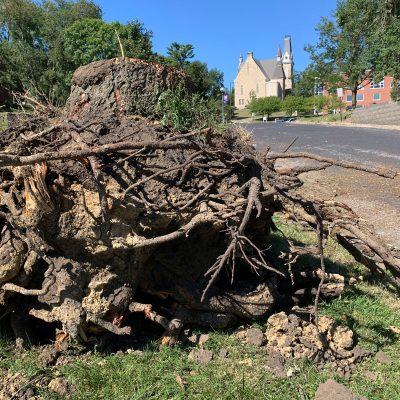 Derecho-tree-roots-King-Chapel