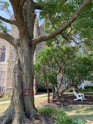 Derecho damaged tree