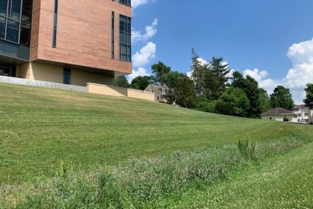 A grassy area behind Russell Science Center that filters out water running down the hill.